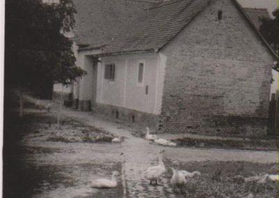 pridvorije_stare_slike_1974 (7)
