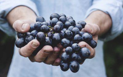 Objavljen je natječaj za mjeru Restrukturiranje i konverzija vinograda, potpore i do 750.000 eura!